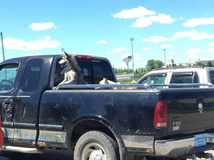 Photo: Dogs Arriving in Pickup Truck
