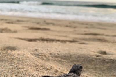 Mazunte Project 2019: A Veterinary Journey to Create a Better World