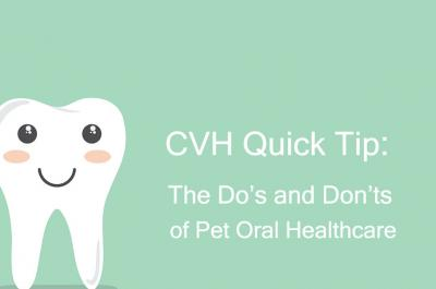 CVH Quick Tip: The Do's and Don'ts of Pet Oral Healthcare